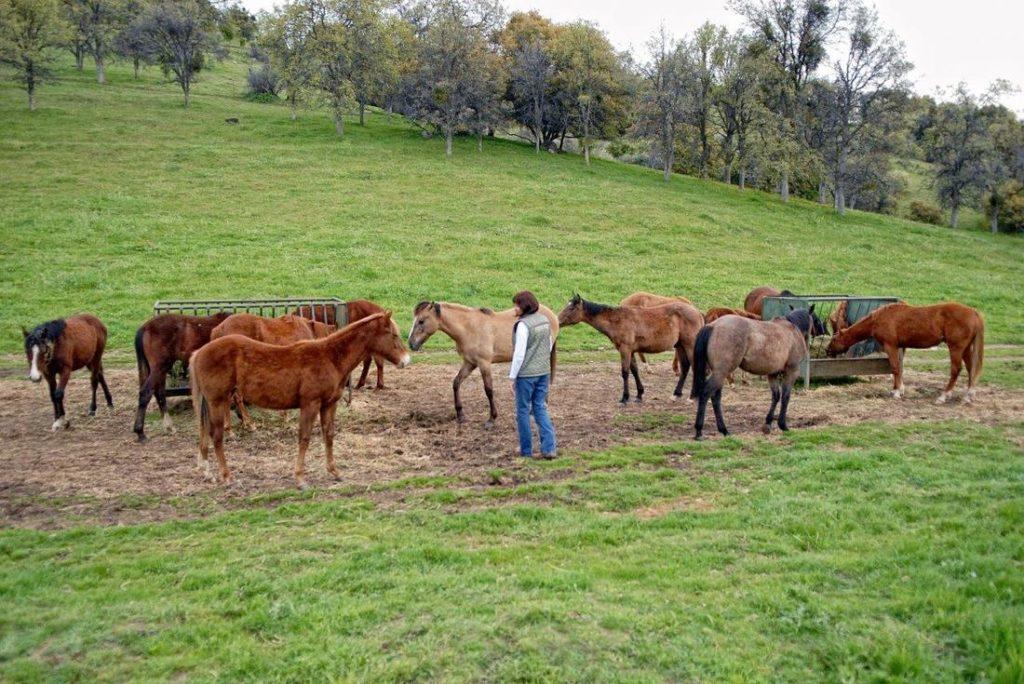 Fairlea Ranch Mares