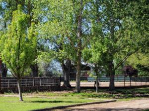 Fairlea Ranch Exeter